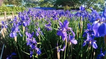 公園の花.jpg